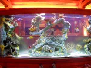 Planning a Custom Saltwater Aquarium Jacksonville FL