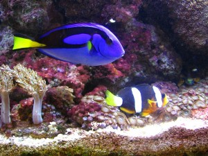 saltwater aquarium maintenance Jacksonville Florida