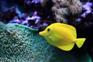 Saltwater Aquarium maintenance Jacksonville Fl